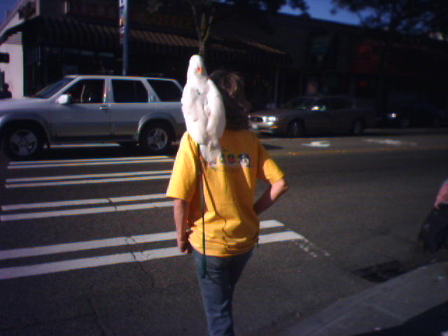 Why did the cockatoo crossed the road?