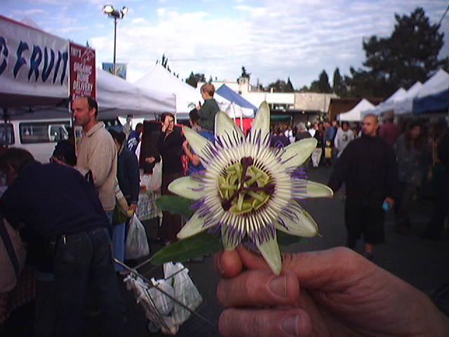 Passion Flower @ Columbia Farmers Market