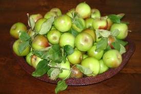 Apples_1