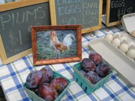 duck_chicken_quail_eggs_for_sale