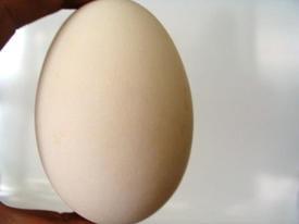 Organic_goose_egg