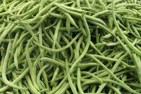 organic_haricots_vert
