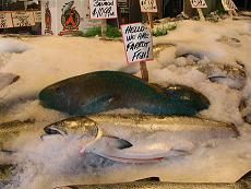 parrot_fish_at_pike_place_market